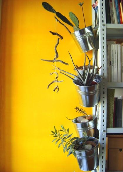 A zonzo per idee piante grasse in casa in inverno - Piante grasse in casa ...