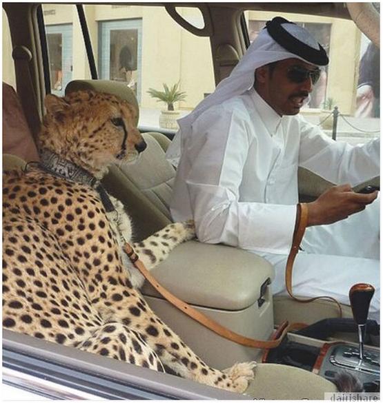 15 GAMBAR Gaya Hidup JUTAWAN MUDA Dubai Yang Di LUAR TABIAT Manusia Gambar 8 Paling Dasyat