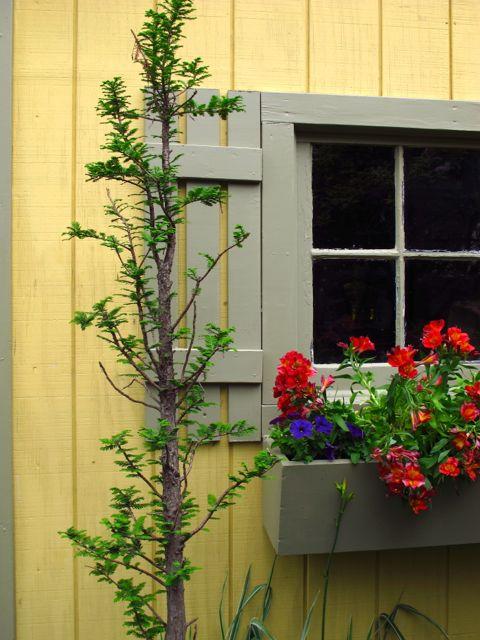 Skinny garden ideas native home garden design for Narrow trees for tight spaces