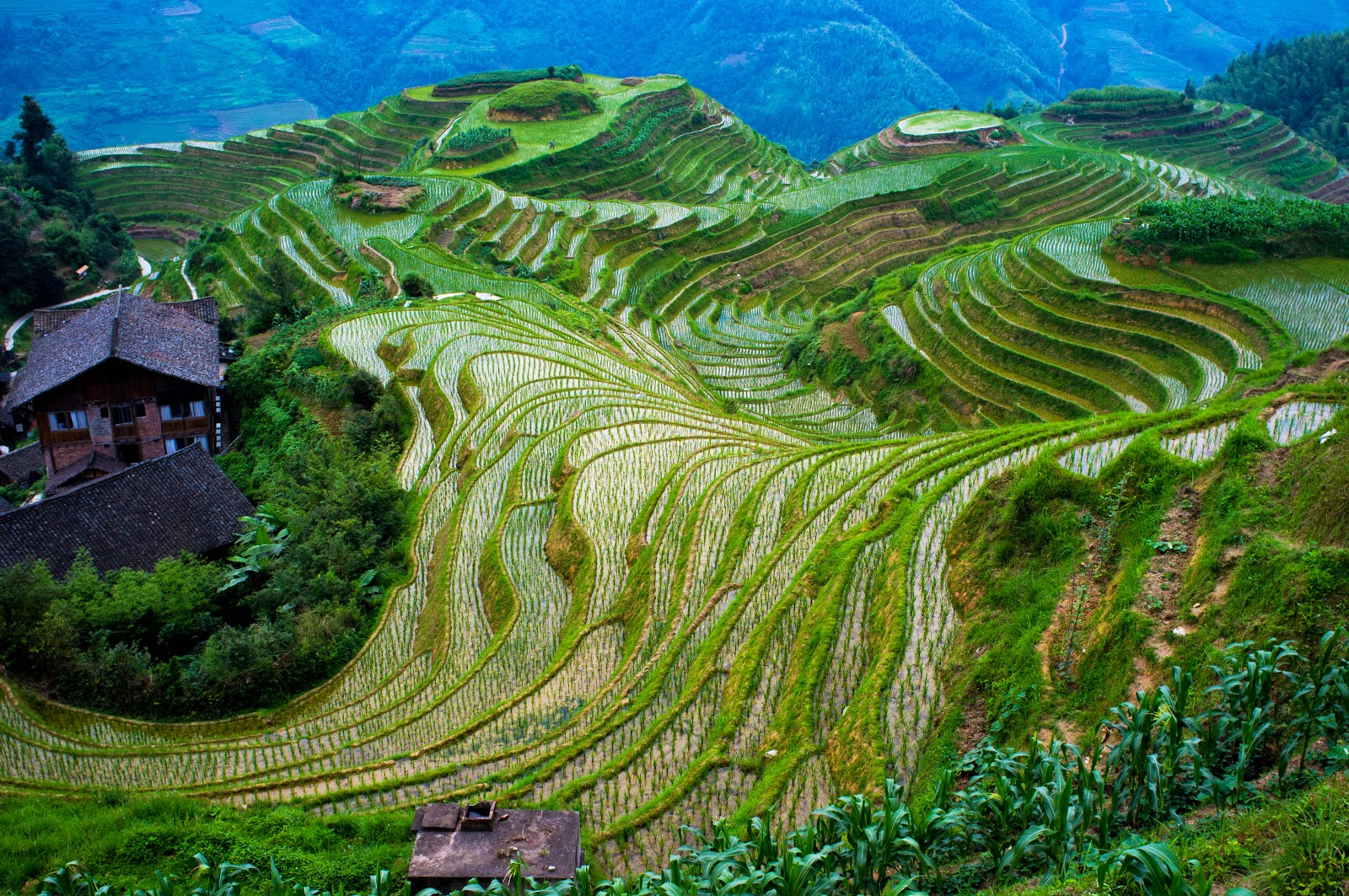 Intensive subsistence farming rice the for What is terrace farming definition