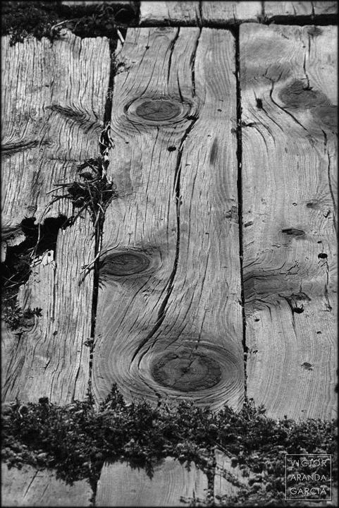 fotografía, el_saler, valencia, naturaleza, madera, planta, blanco_y_negro, serie, arte