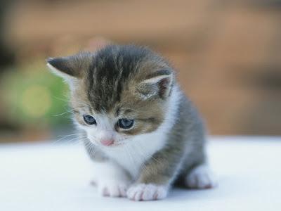 foto kucing lucu 08