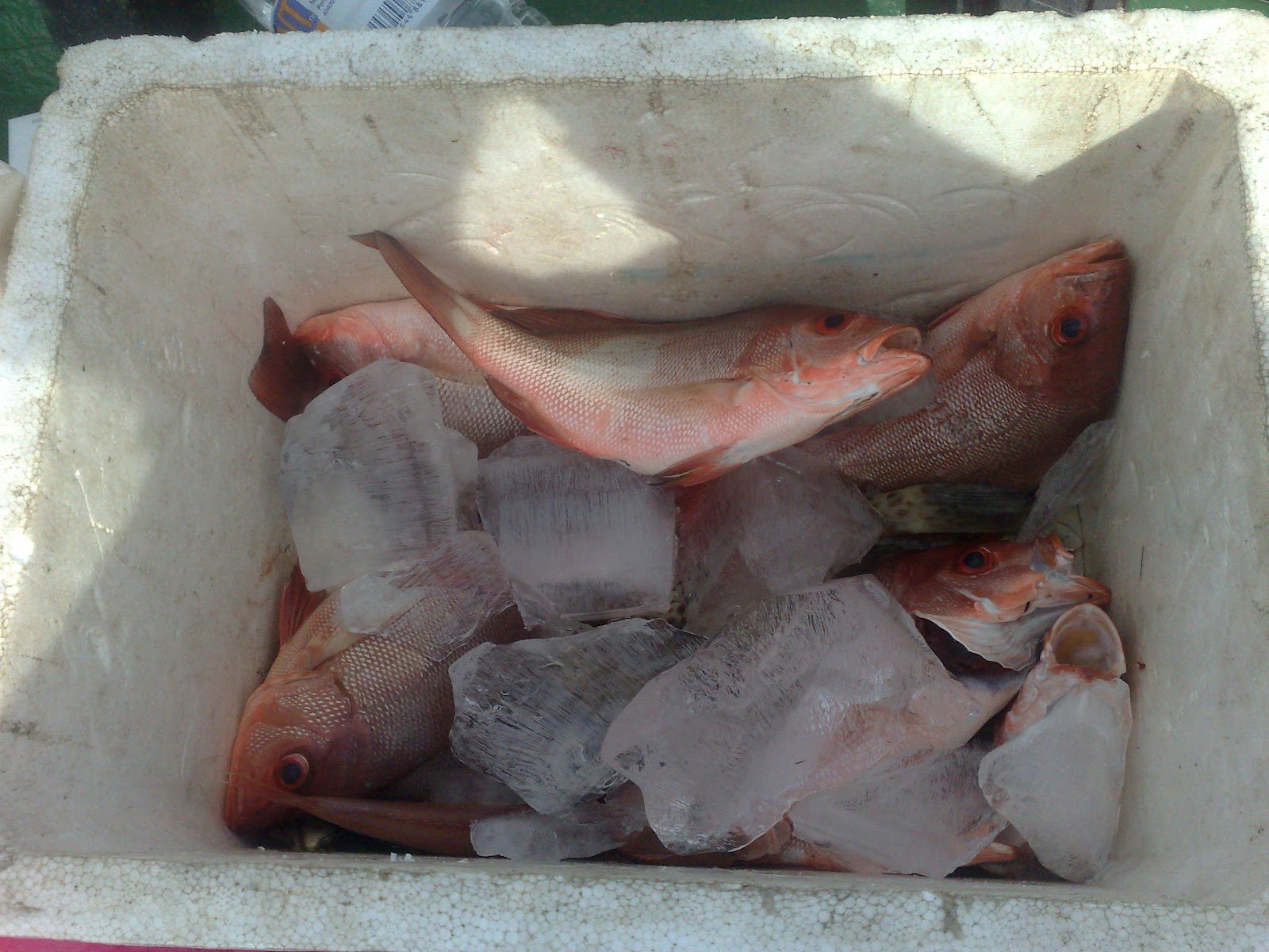 Border Fishing Team (D`FisT): Menyingkap Tabir Pulau Sari