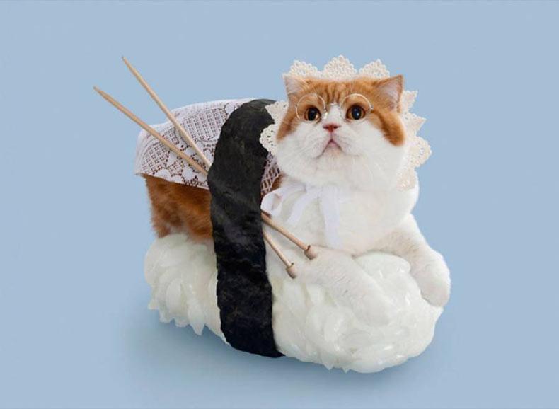 Gatos vestidos como rollos de sushi