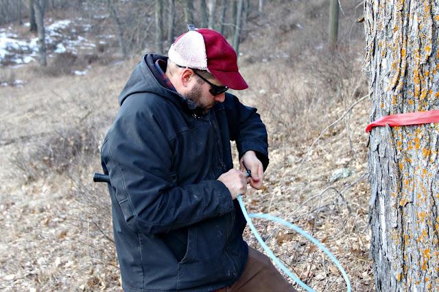 prepping the spile for maple tree tapping