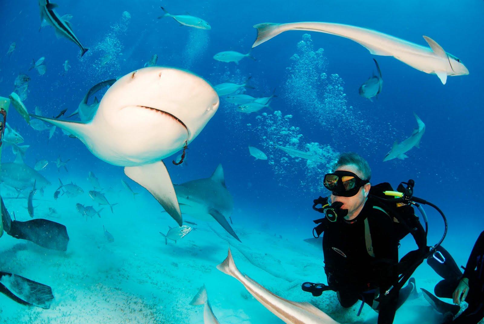 Buceador a lado de tiburones en playa del Carmen