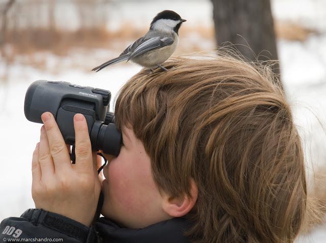 Observar passarinhos é uma atividade complexa