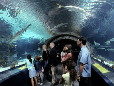 Travels And Visits Adventure Aquarium