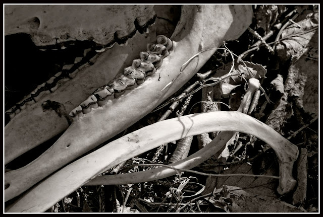 Dead; Death; Bones; Future Fossils; Decay; Skeleton; Deer