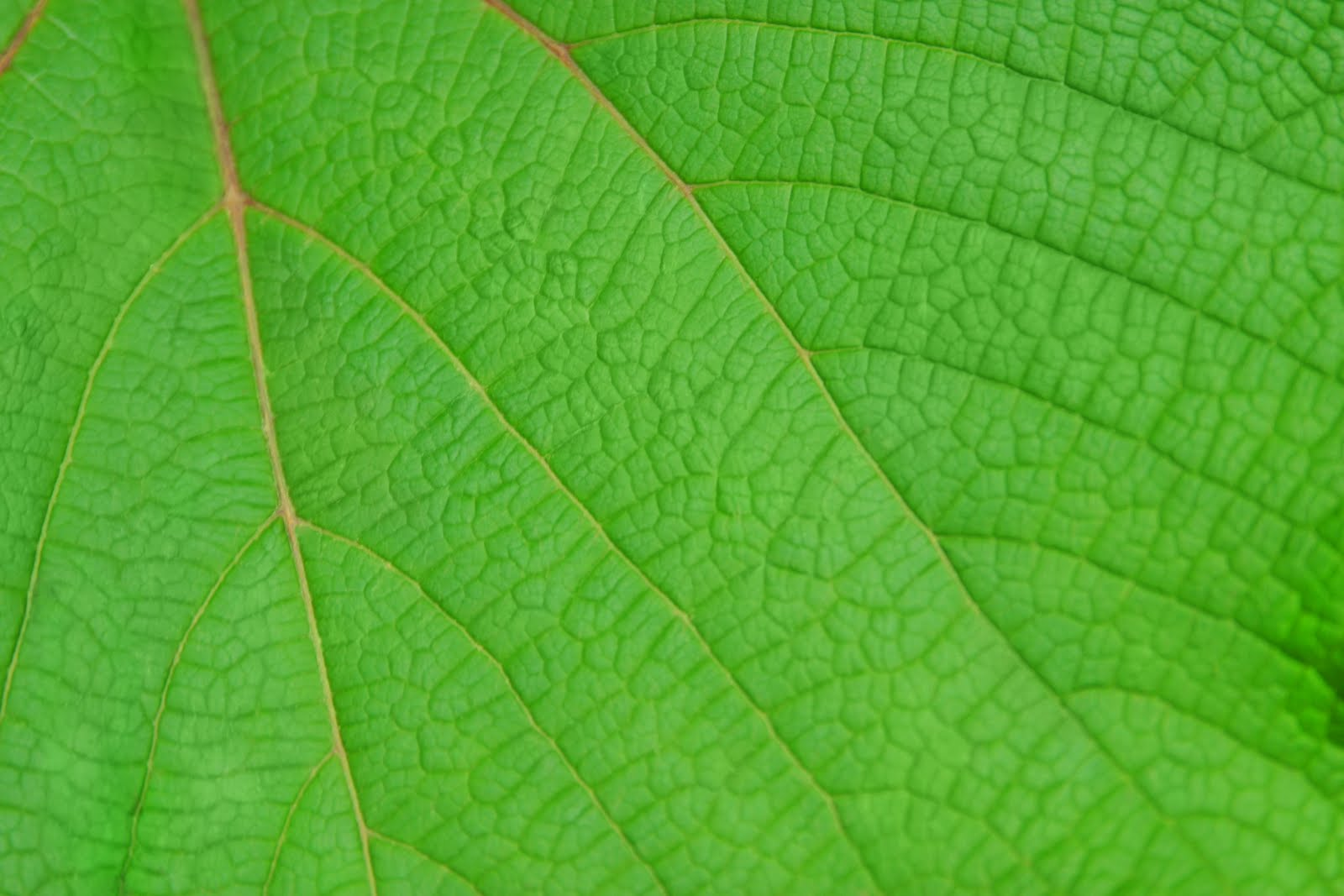 Download image Imagenes De Hojas Verdes PC, Android, iPhone and iPad