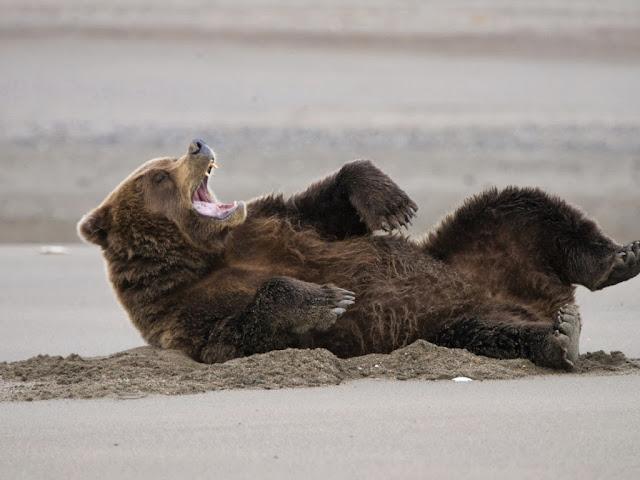 "<img src=""http://4.bp.blogspot.com/-oy2qAF4BtHI/Uq25Z6IbtLI/AAAAAAAAFfk/CiyqxY7ZcxQ/s1600/xc.jpg"" alt=""Bear wallpapers"" />"