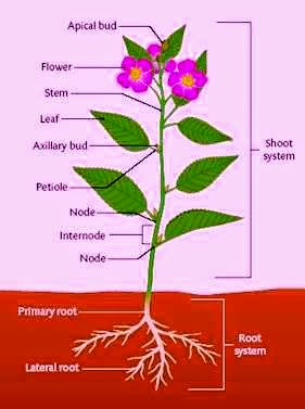 The Importance of Roots  Kids Ecology