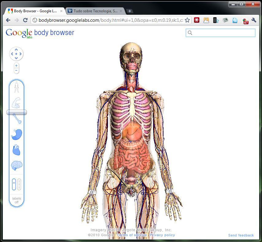 Info Esporte Clube: Google Body Browser - Viagem pelo corpo humano 3D
