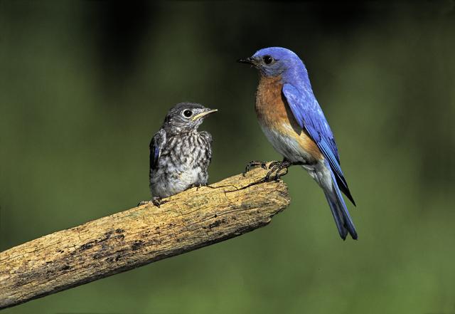 Wild Birds Unlimited: Bluebird house that keeps out Sparrows on free bird feeder designs, bird house designs, free martin bird house plans, free printable bird house plans, free gazebo designs,
