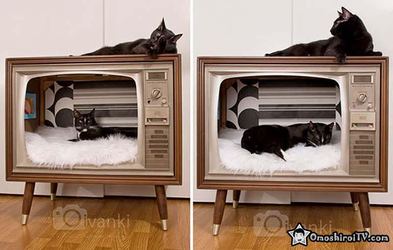 Casas para gatos taringa - Fotos de casas para gatos ...