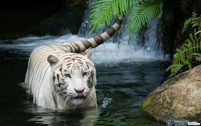 A Maldição Do Tigre Colleen Houck Construindo O Verbo