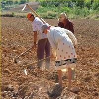 Atividade Rural, Averbação no INSS, Aposentadorias