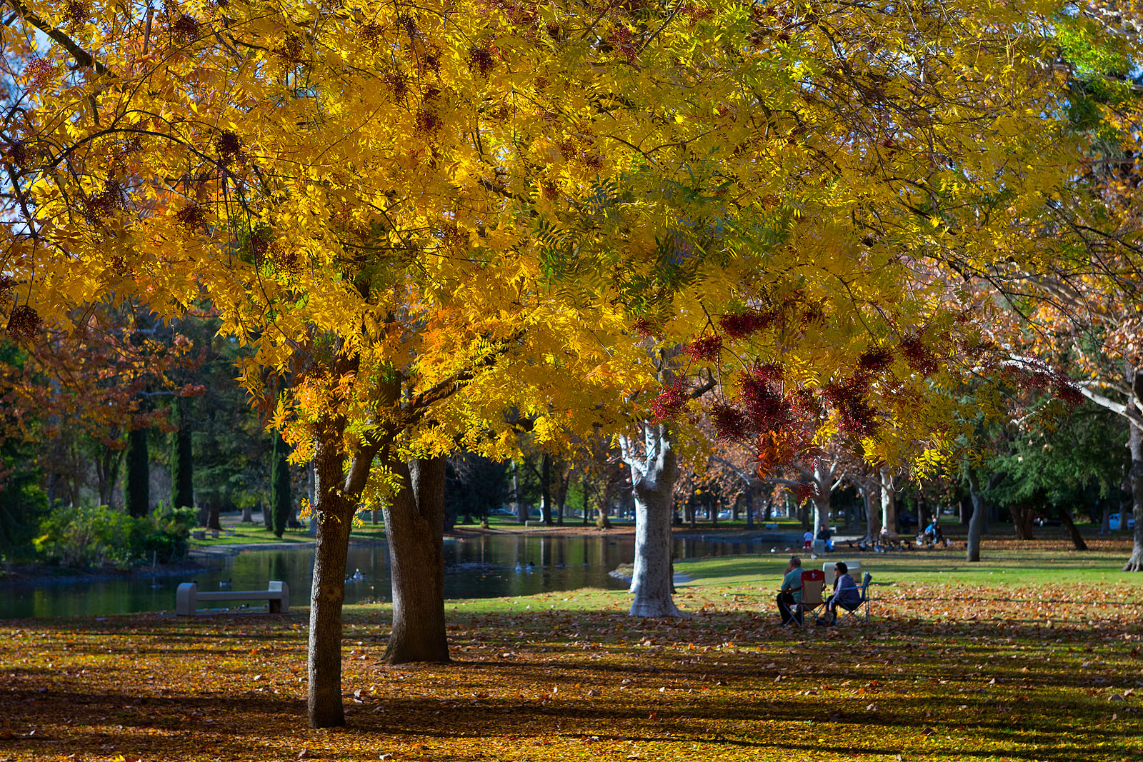 Anthony dunn photography fall in william land park for Anthony s italian cuisine sacramento