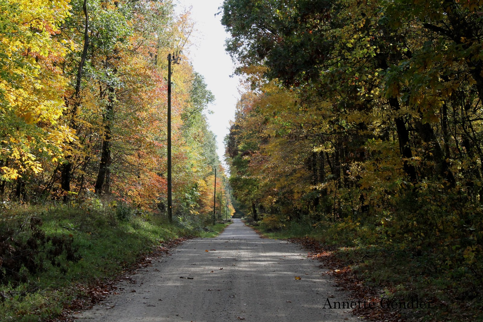 country road essay If country roads is an example of how well west virginians understand state geography is it any wonder that the rest of the country thinks of west virginians as ignorant, backwoods, hillbillies becky rankin from huntington,.