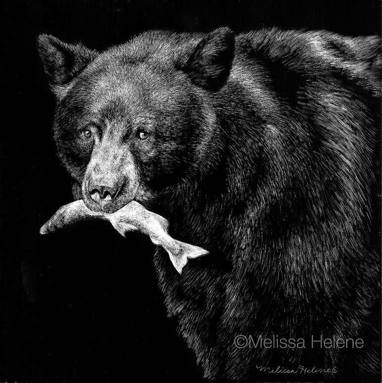 13-Black-Bear-Melissa-Helene-Amazing-Expressions-in-Scratchboard-Animal-Portraits-www-designstack-co