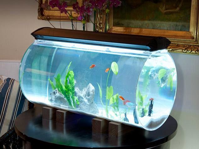 15 Coolest Fish Bowls And Awesome Aquarium Designs Part 3