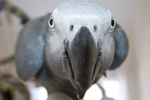 Funny white parrot bird funny animal - Funny bird pics ...