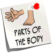 http://quizlet.com/12713953/parts-of-the-body-flash-cards/