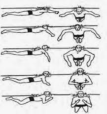 Renang gaya dada adalah