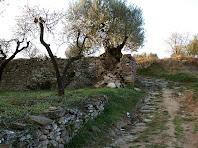 El Camí dels Calls rodejat d'ametllers i oliveres