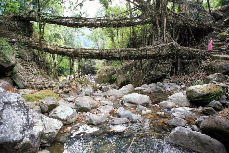Meghalaya's double-decker Live Root Bridges