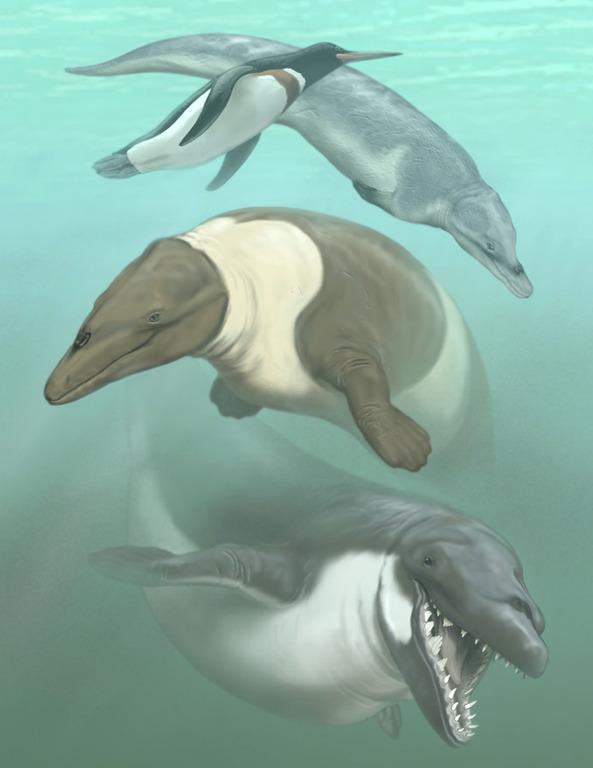 Penguinology  Penguin Ancestor Swimming With The Predators