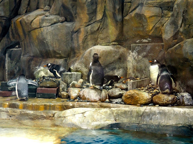 Penguins in the South Pole Spectacular exhibit, Ocean Park, Hong Kong