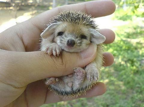 Image result for porcupine pin cushion