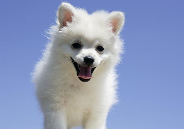 Hermosos Perros