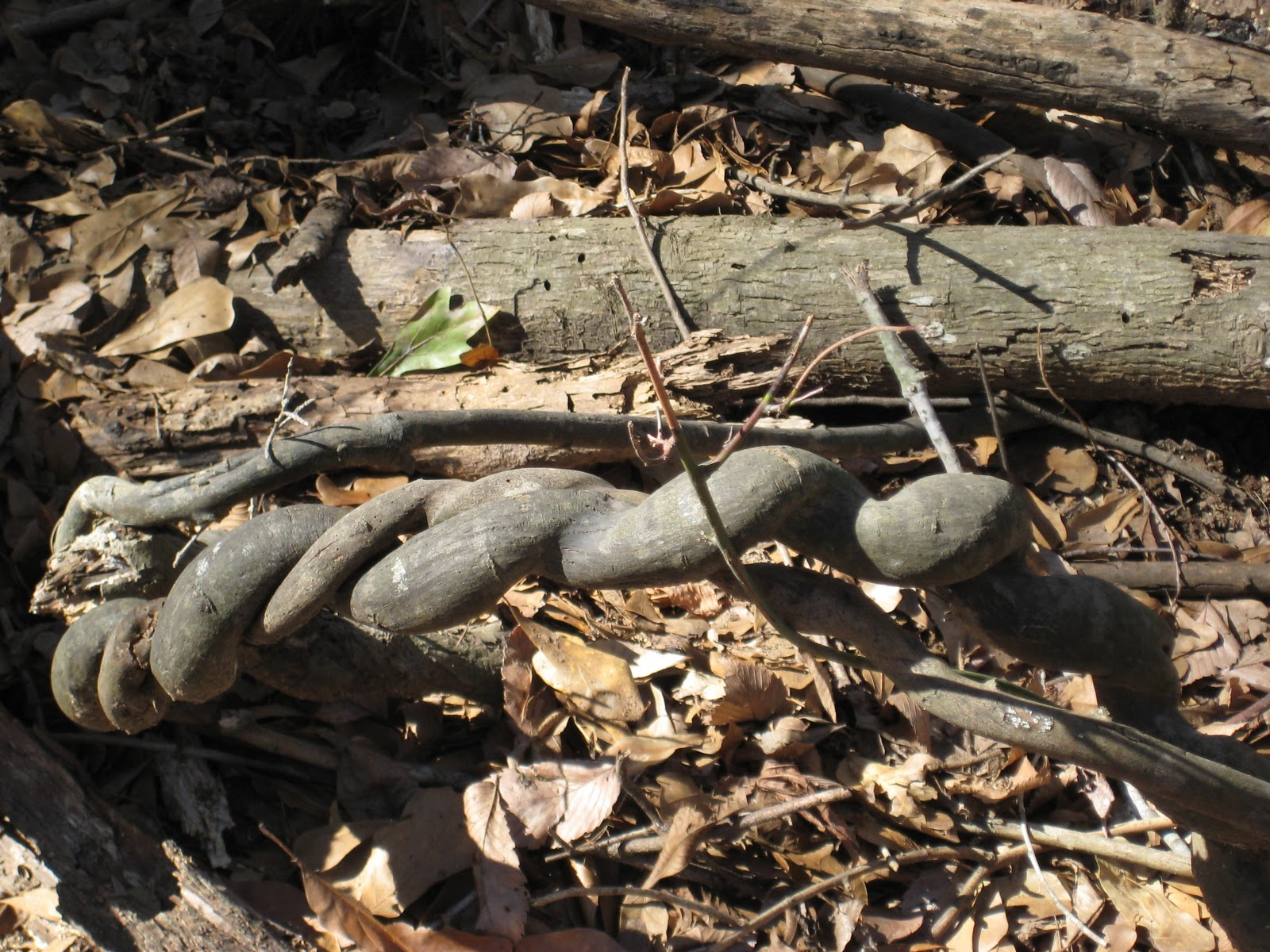 The Gardens of Edom: A Winter Walk in the Woods