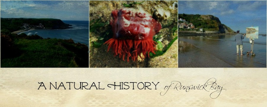 A natural history of Runswick Bay