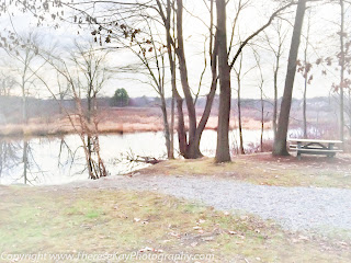 photograph of park by water in winter