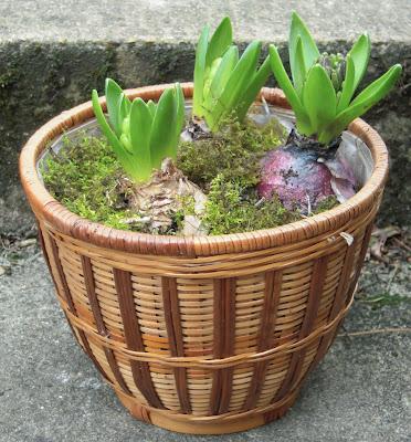 DIY pot de fleurs jacinthes