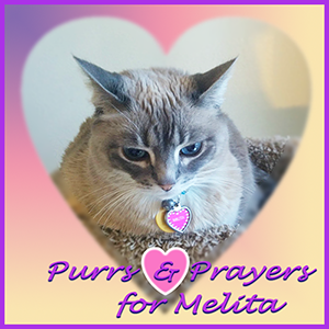 Purrs and Prayers for Melita
