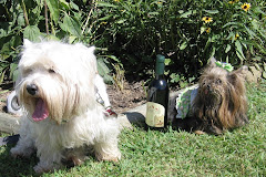 Wine Dog of the Year