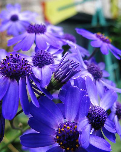 hình nền về hoa đẹp tuyệt vời