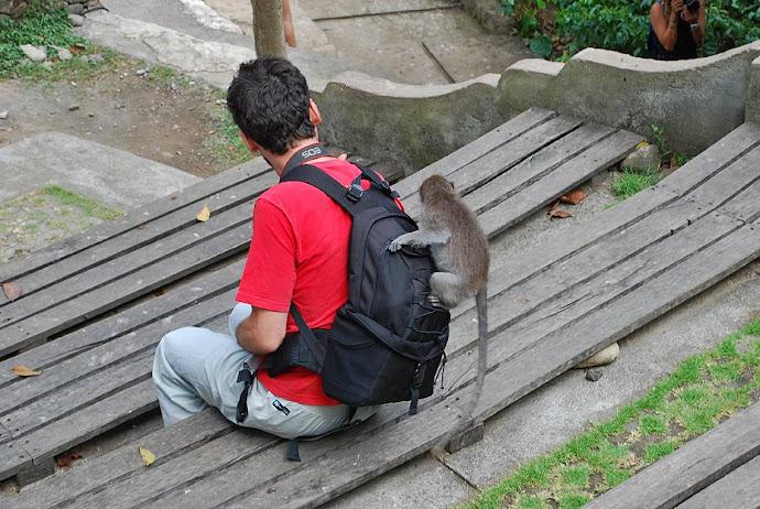 Mono encima de un turista