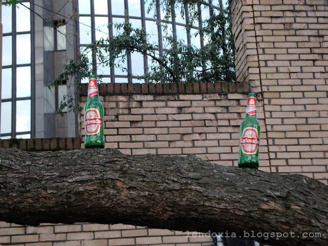 boce na stablu