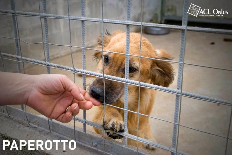 cucciolo adozione Roma