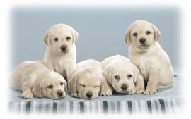 Puppies pics