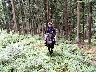 Orawa, Lipnica Wielka, Babia Góra, konie, kucyki, jazda konna, szkolenie koni, jazdy w terenie