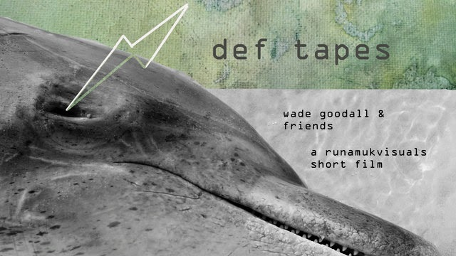def tapes wade goodall and friends