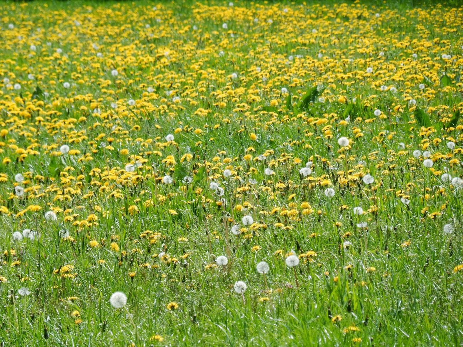 weiland met bloemen