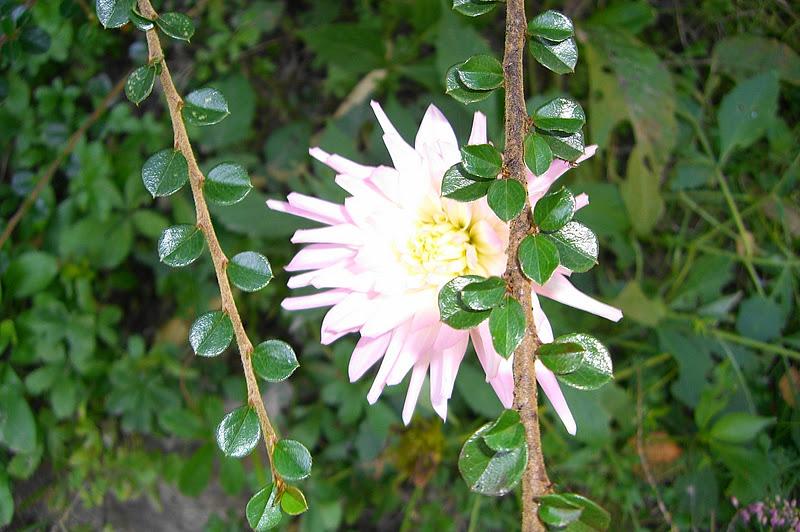 Sakujade plantes et fleurs d 39 automne dans nos jardins - Plantes fleuries d automne ...