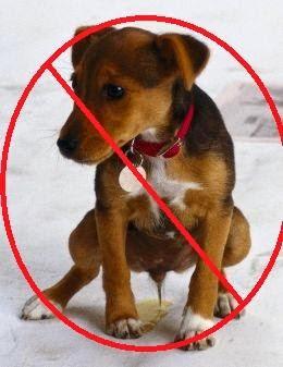 productos de limpieza jady quimica repelente para perros